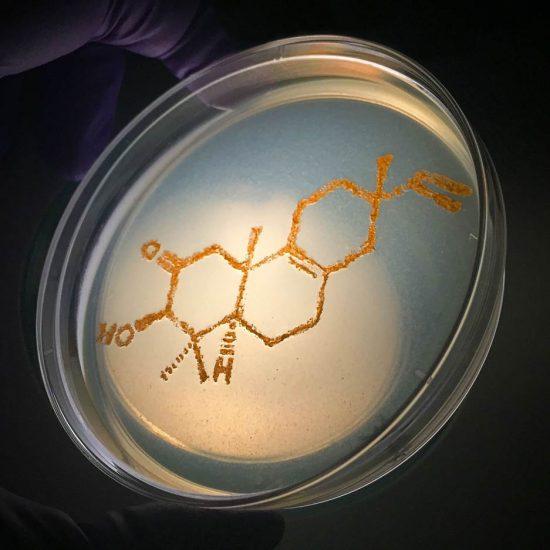 A Rare Bacterial-Derived Diterpene